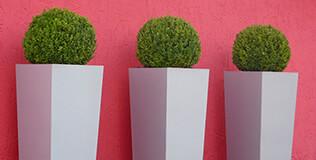 Regentonnen bepflanzbar