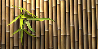 bambus sichtschutz